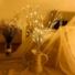Kép 6/8 - LED faág dekoráció, Elemes