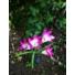 Kép 3/4 - Lily napelemes kerti lámpa  piros színvilág