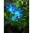 Kép 2/4 - Lily napelemes kerti lámpa  kék színvilág