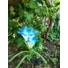 Kép 3/4 - Lily napelemes kerti lámpa  kék színvilág